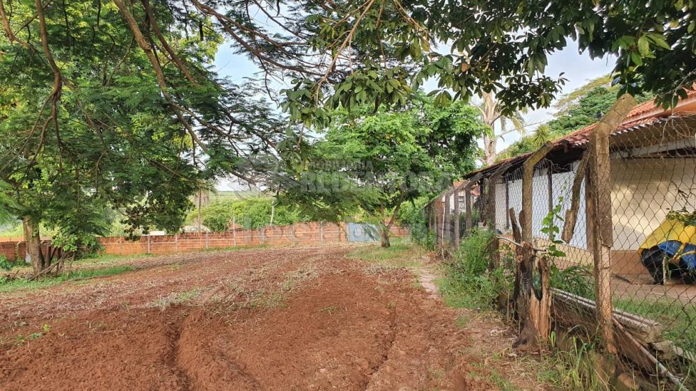 Comprar Rural / Chácara em Cedral R$ 150.000,00 - Foto 1