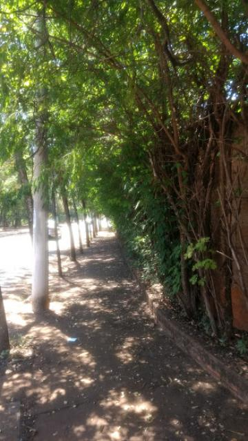 Comprar Terreno / Área em Olimpia R$ 860.000,00 - Foto 10