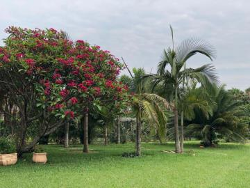 Comprar Casa / Condomínio em Mirassol R$ 2.500.000,00 - Foto 4
